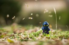 Ninja in the grass